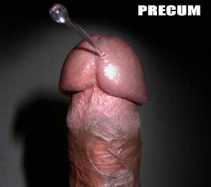 Do you have a lot of precum? Or maybe you don't seem to have any at all. This article is all about cock drool, what it is, what it isn't, how to enjoy, and even how to increase the amount pre-ejaculate your penis produces.